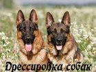 Увидеть фотографию  Дрессировка собак с выездом на дом, 34663244 в Набережных Челнах