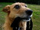 Свежее фото  Дрессировка и воспитание собак в Набережных Челнах 38301378 в Набережных Челнах