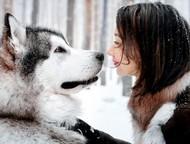 Дрессировка собак с проживанием у кинолога в г, Набережные Челны Дрессировка соб