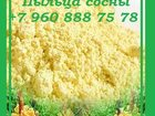 Изображение в Красота и здоровье Услуги народной медицины Продам пыльцу сосновую из Китая, очищенную, в Нальчике 1400