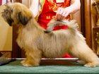 Фото в Собаки и щенки Стрижка собак Стрижки собак: стандартные, модельные, спортивные, в Нефтеюганске 0