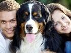 Смотреть изображение  Дрессировка собак г, Набережные Челны 68462643 в Набережных Челнах