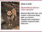 Изображение в   Все собаки привиты, стерилизованы.   Обработаны в Нижнем Новгороде 0