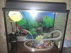 Фотография в Рыбки (Аквариумистика) Купить аквариум Аквариум, 30 литров:все в комплекте (Освещение, в Нижнем Новгороде 2000