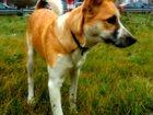 Фото в Help! Потери Сегодня найдена рыжая собака, видимо домашняя, в Нижнем Новгороде 0