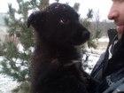 Изображение в Собаки и щенки Продажа собак, щенков Отдадим в добрые руки щенков!   Их 4 штуки, в Нижнем Новгороде 0