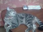 Фото в   кот1. 3 года не опытный в Богородске 0