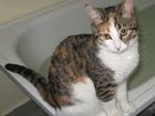 Просмотреть изображение Вязка кошек Кошка Мурка ищет кота для вязки 40161594 в Нижнем Новгороде