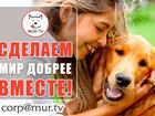 Скачать изображение Услуги для животных Помощь животным, питомцам 61279796 в Нижнем Новгороде