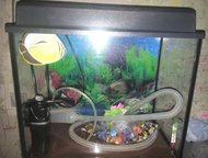 Продам аквариум Аквариум, 30 литров:все в комплекте (Освещение, фильтр, градусни