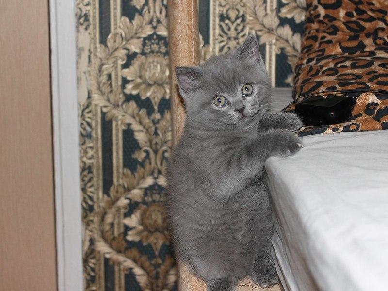 котята в нижнем новгороде фото