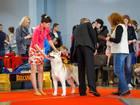 Изображение в Собаки и щенки Вязка собак Сибирский хаски CHERNYI VALLS ZHON DOR  в Нижнем Тагиле 777