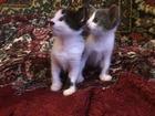 Новое фото Отдам даром - приму в дар Отдам котят в добрые руки 39160621 в Нижнем Тагиле