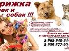 Фото в Домашние животные Разное Предлагаем к вашему Вниманию! свои услуги в Ногинске 100
