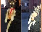 Фото в Потерянные и Найденные Найденные Нашли маленького щенка 2-3 месяца мальчика в Норильске 0