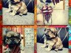 Изображение в Собаки и щенки Продажа собак, щенков Шикарная девочка. Родилась 15. 09. 15. Очень в Новокузнецке 5000