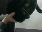 Фото в Потерянные и Найденные Потерянные Уже вторые сутки сидит в подъезде кошка. в Новокузнецке 0