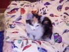 Фотография в   Отдам в добрые руки симпотичного котенка. в Новокузнецке 0