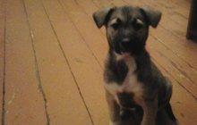 Отдам двухмесячного щенка