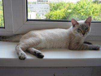 Свежее фотографию Отдам даром - приму в дар Отдам котят 33272443 в Новокузнецке