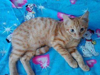 Увидеть изображение Отдам даром котика 33345692 в Новокузнецке