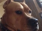 Фото в   Отдам в добрые, надежные руки собаку породы в Новомосковске 0