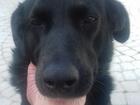 Смотреть фото Продажа собак, щенков отдам щенков в хорошые руки 38400594 в Новороссийске