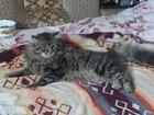 Скачать изображение Потерянные пропал кот 39597777 в Новороссийске