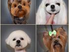 Просмотреть фотографию Стрижка собак Профессиональная стрижка собак 60786603 в Новороссийске