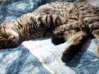 Уникальное foto  Найден молодой котик! Ищем старых и новых хозяев! 32413614 в Новосибирске