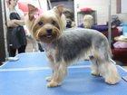 Смотреть фото Услуги для животных Стрижка домашних животных , Подрезание когтей, 32608722 в Новосибирске