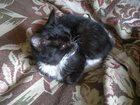 Фото в Отдам даром - Приму в дар Отдам даром Ищет хозяев добрый и к активный котёнок! в Новосибирске 0