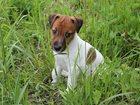 Изображение в Собаки и щенки Продажа собак, щенков Выбери себе преданного друга среди щенков в Новосибирске 30000