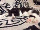 Изображение в   15. 06. 2015 найден котенок (мальчик) по в Новосибирске 0