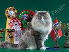 Фотография в   Чистопородные норвежские лесные котята из в Новосибирске 30000