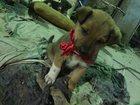 Фотография в   спасите жизнь маленьким щенулям! ! ! возьмите в Новосибирске 0