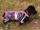 Фотография в Потерянные и Найденные Потерянные Убежал щенок, 8 месяцев, девочка, породы в Новосибирске 0