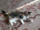 Фотография в Отдам даром - Приму в дар Отдам даром отдам котенка . девочка, в лоток ходит кушает в Новосибирске 0