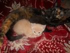 Фото в Отдам даром - Приму в дар Приму в дар Два очень игривых, здоровых, котика, ищут в Новосибирске 0