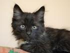 Фото в Потерянные и Найденные Потерянные Отдам котят добрым и ответственным людям. в Новосибирске 0