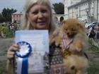 Фотки и картинки Померанский шпиц смотреть в Новосибирске