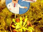 Смотреть foto  Хищные растения (мухоловка, непентес, жирянка, саррацения), 37512890 в Новосибирске