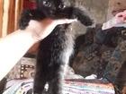Фотография в Отдам даром - Приму в дар Отдам даром С древних времен кошка считалась священным в Новосибирске 0