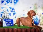 Скачать бесплатно фото Вязка собак Предлагается для вязки кобель Венгерская выжла в Новосибирске (импорт Венгрия) 37695247 в Новосибирске