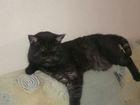 Изображение в Кошки и котята Вязка О себе, мне 3 года, игривый и плюшевый. Котята в Новосибирске 1500