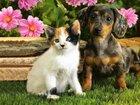 Новое фото Стрижка собак Стрижка собак / кошек любых пород, Выезд 38865876 в Новосибирске