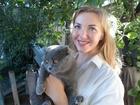 Свежее фотографию Вязка кошек Нужен Скоттиш-страйт для вязки 40237648 в Новосибирске