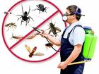 Скачать foto Разные услуги Уничтожение тараканов, муравьёв, клопов, блох 67719224 в Новосибирске