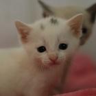Отдам в добрые руки милейшего котёнка