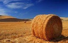 Продам сено в тюках Новосибирск